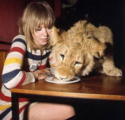 aslan-beslemek