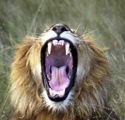 aslan-oldurmek