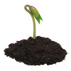 cicek-tohumu