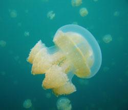 denizanasi-isirmasi