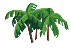 palmiye-agaci