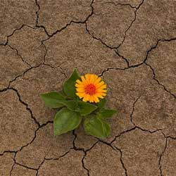 toprak-opmek