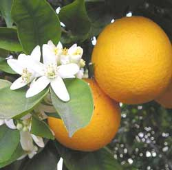 turunc-toplamak