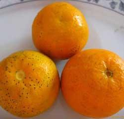 turuncu-yemek