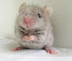 yatakta-fare-oldurmek