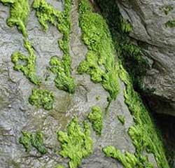 yosun