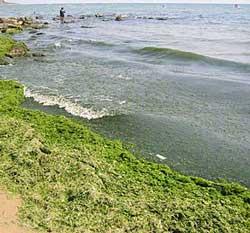yosunlu-deniz