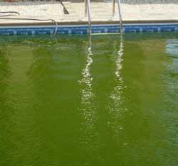 yosunlu-havuz