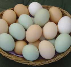 yumurta-toplamak